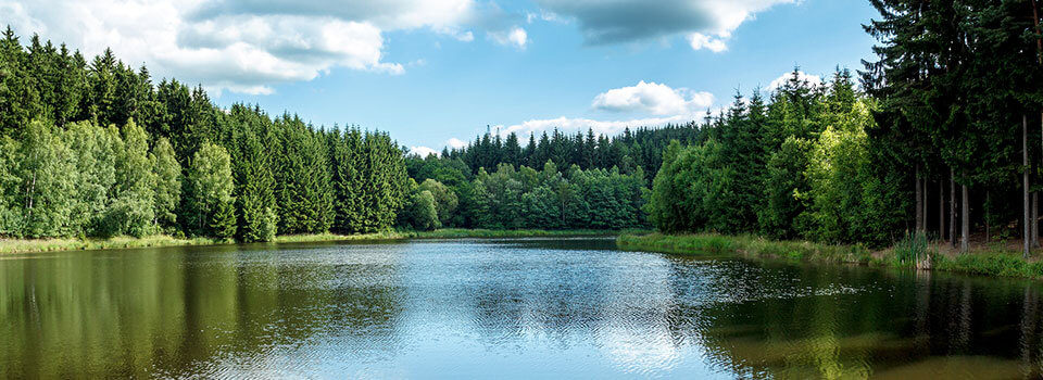 small lake, pine trees reflecting in it, and blue sky with puffy white clouds